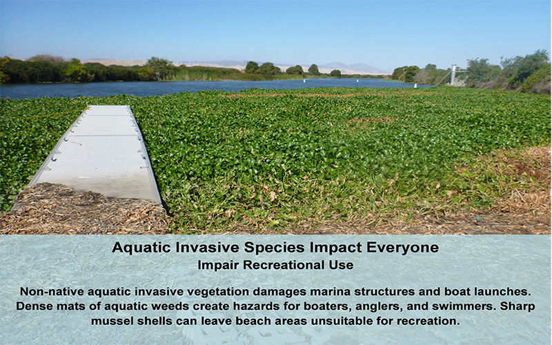 draft 2 truth about invasive species The national invasive species council (nisc) is a council of federal departments and agencies tasked to provide national leadership regarding invasive species.
